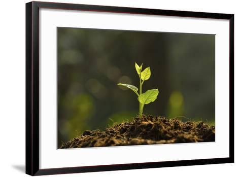 Young Plant-amenic181-Framed Art Print
