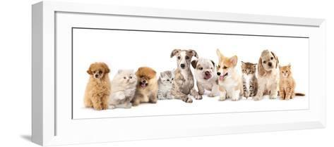 Group of Puppies and  Kitten of Different Breeds, Cat and Dog-Lilun-Framed Art Print