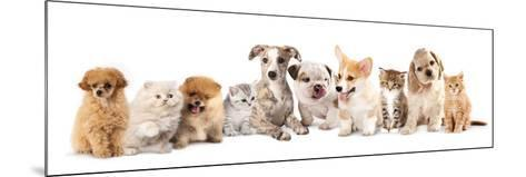 Group of Puppies and  Kitten of Different Breeds, Cat and Dog-Lilun-Mounted Photographic Print