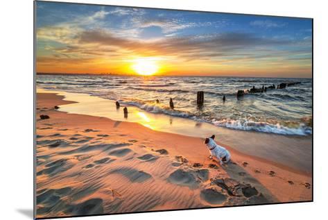 French Bulldog on the Beach at Sunset-Patryk Kosmider-Mounted Photographic Print