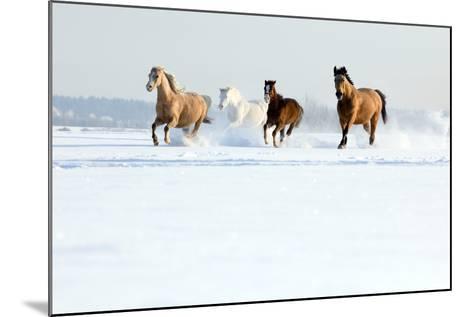 Herd of Horses in Winter-Alexia Khruscheva-Mounted Photographic Print