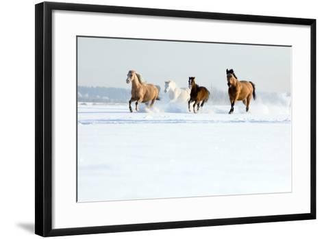 Herd of Horses in Winter-Alexia Khruscheva-Framed Art Print