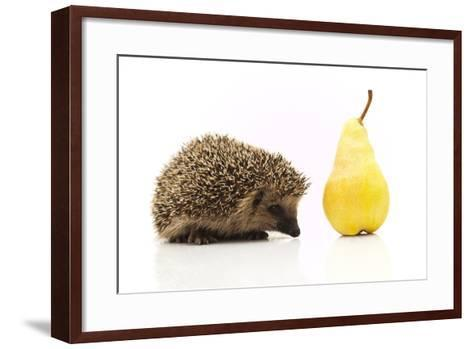 Little Hedgehog and Pear-shiffti-Framed Art Print
