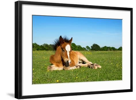 Cute Brown Foal Laying on Grass-andy lidstone-Framed Art Print