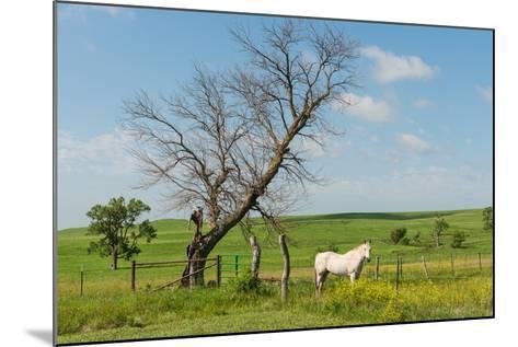 Horse-Hank Shiffman-Mounted Photographic Print