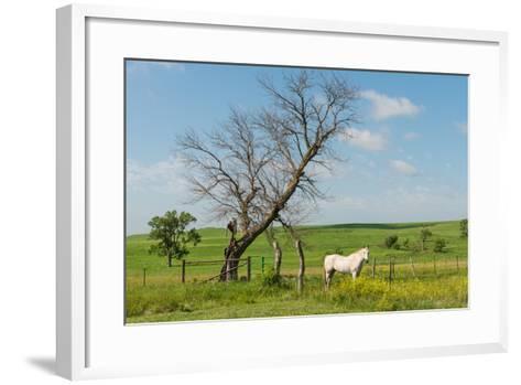 Horse-Hank Shiffman-Framed Art Print