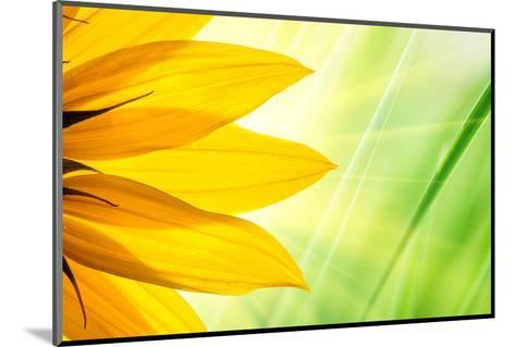 Sunflower Flower over over Green Floral Background-logoboom-Mounted Photographic Print