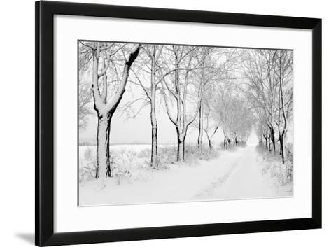 Rows of Snowbound Trees in the Park-pavel klimenko-Framed Art Print