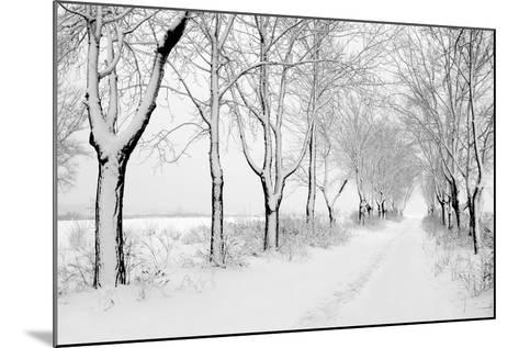 Rows of Snowbound Trees in the Park-pavel klimenko-Mounted Photographic Print