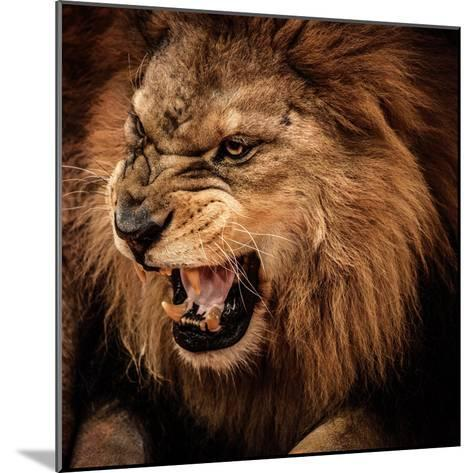 Close-Up Shot of Roaring Lion-NejroN Photo-Mounted Photographic Print