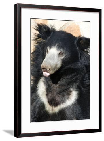 Indian Sloth Bear-Spaxia-Framed Art Print