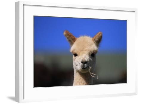 Tan Cria Alpaca-CountrySpecial-Framed Art Print