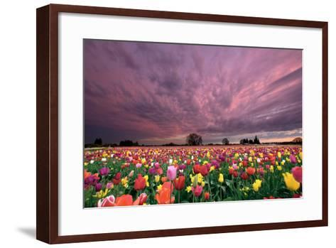Sunset over Tulip Field-jpldesigns-Framed Art Print
