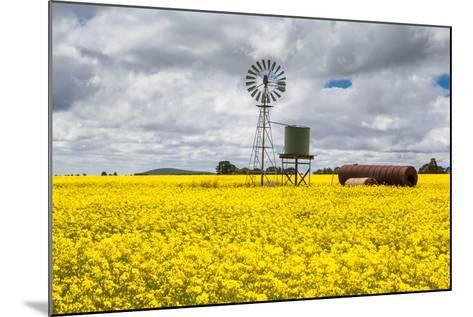 Canola Fields near Smeaton-FiledIMAGE-Mounted Photographic Print