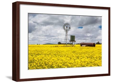 Canola Fields near Smeaton-FiledIMAGE-Framed Art Print