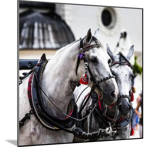 Horses and Carts on the Market in Krakow, Poland.-Curioso Travel Photography-Mounted Photographic Print