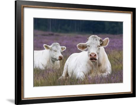 Resting Cow in Heather-Ivonnewierink-Framed Art Print