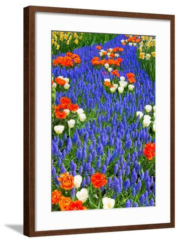 Blue River of Muscari Flowers in Holland Garden-neirfy-Framed Art Print