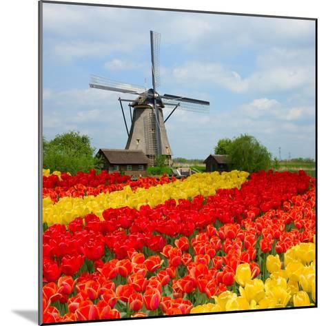 Dutch Windmill over Tulips Field-neirfy-Mounted Photographic Print