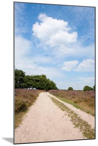 Landscape with Sand Path Purple Heath Fields in Summer-Ivonnewierink-Mounted Photographic Print