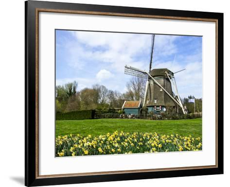 Traditional Dutch Windmill with Daffodils Field Nearby, the Netherlands-Tetyanka-Framed Art Print