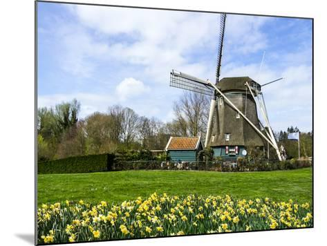 Traditional Dutch Windmill with Daffodils Field Nearby, the Netherlands-Tetyanka-Mounted Photographic Print
