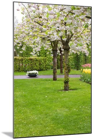 Spring Blooming Trees-neirfy-Mounted Photographic Print