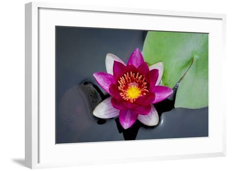 Water Lily-Michael Shake-Framed Art Print