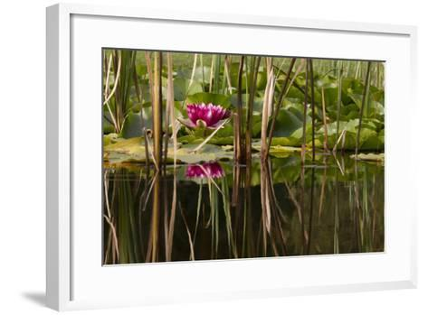 Water Lily in Pond-humbak-Framed Art Print