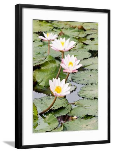 Water Lily (Lotus) and Leaf in Pond-chomnancoffee-Framed Art Print