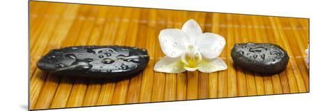 Japanese Zen Garden-filmfoto-Mounted Photographic Print