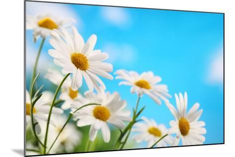 Daisy Flower against Blue Sky-Liang Zhang-Mounted Photographic Print