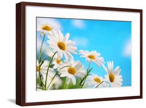Daisy Flower against Blue Sky-Liang Zhang-Framed Art Print