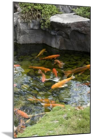 Koi Pond-dosecreative-Mounted Photographic Print