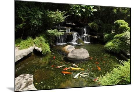 Japanese Variegated Carps Swimming in Garden Pond-eskay lim-Mounted Photographic Print