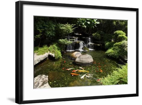 Japanese Variegated Carps Swimming in Garden Pond-eskay lim-Framed Art Print