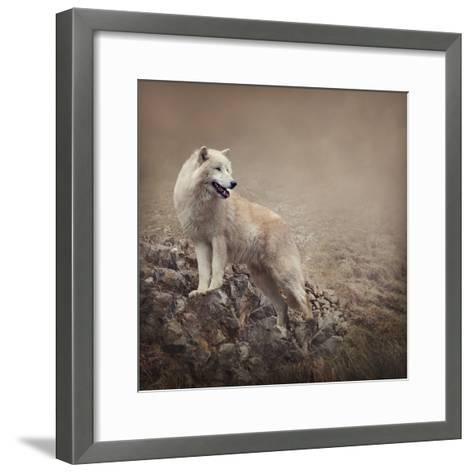 White Wolf at the Night-egal-Framed Art Print