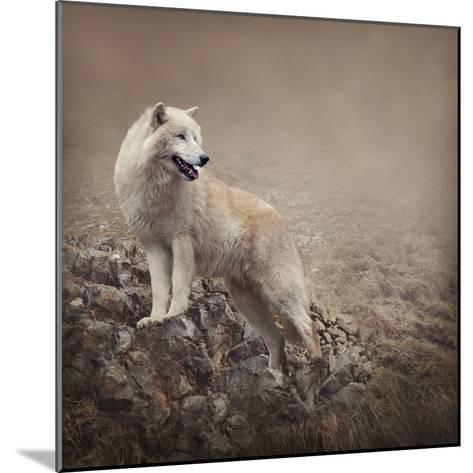 White Wolf at the Night-egal-Mounted Photographic Print