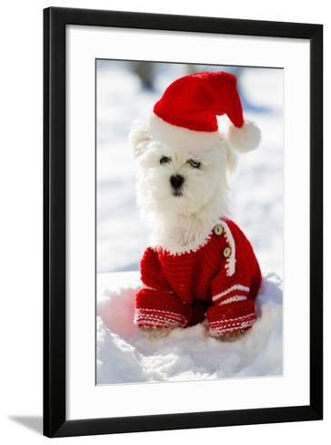 Christmas Puppy, Winter - Portrait of Maltese Puppy in Santa Hat Sitting in Snow-Gorilla-Framed Art Print