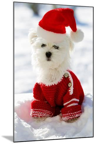 Christmas Puppy, Winter - Portrait of Maltese Puppy in Santa Hat Sitting in Snow-Gorilla-Mounted Photographic Print