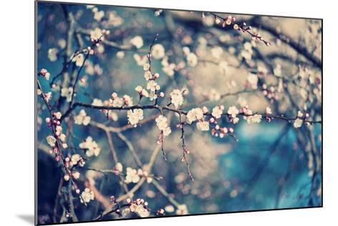 Apricot Tree Flower-Roxana_ro-Mounted Photographic Print