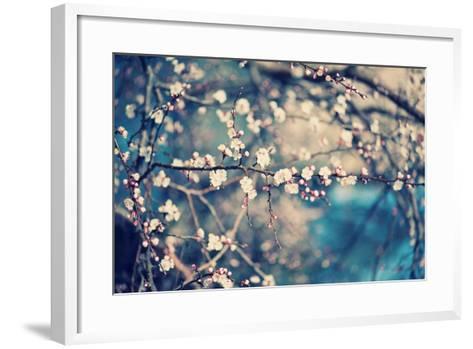 Apricot Tree Flower-Roxana_ro-Framed Art Print