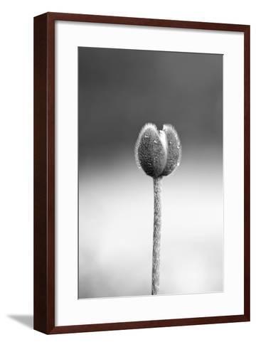 Close up Shot of Allium Flower Bud-SNEHITDESIGN-Framed Art Print