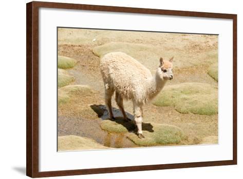 Llama in A Mountain Landscape, Peru-demerzel21-Framed Art Print