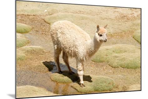 Llama in A Mountain Landscape, Peru-demerzel21-Mounted Photographic Print