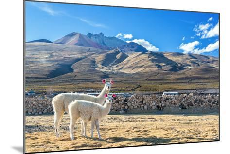 Pair of Llamas-jkraft5-Mounted Photographic Print