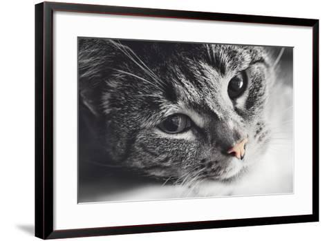 Cute Cat Lying in Lazy, Sleepy Pose Looking at the Camera with its Magnetic Eyes. close Portrait. B-Michal Bednarek-Framed Art Print