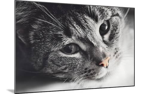 Cute Cat Lying in Lazy, Sleepy Pose Looking at the Camera with its Magnetic Eyes. close Portrait. B-Michal Bednarek-Mounted Photographic Print