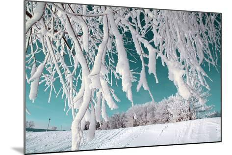 Tree in Snow on Celestial Background-basel101658-Mounted Photographic Print