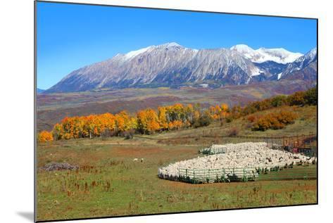 Sheep Farm near Kebler Pass in Colorado-SNEHITDESIGN-Mounted Photographic Print